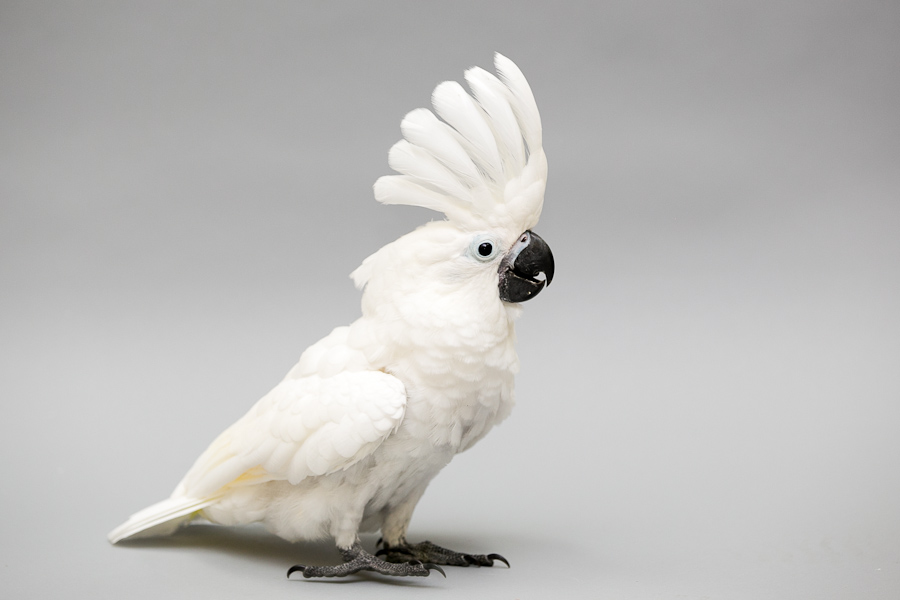 Birds for sale - Visit us at Petland Chillicothe, Ohio Today!