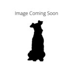 Petland Chillicothe American Water Spaniel